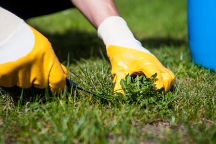 Troy Landscape Maintenance Service Can Make Summer Easier